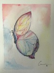 8th Butterfly. Collecting Butterflies. Watercolor and pen 13.5 x 18 x 0.2 cm. VENDIDA